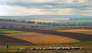 Парламентом Болгарии в первом чтении приняты новые правила продажи земли сельскохозяйственного назна