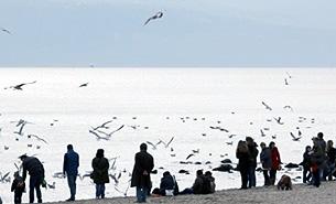 В этом году в Болгарии необычайно теплая зима