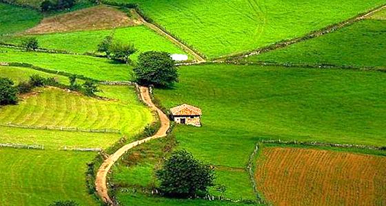 Одобренные проекты по программе развития сельских районов